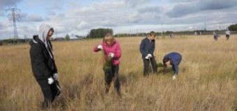Участие учащихся в акции Посадка леса совместно с лесничеством